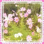 LINEcamera_share_2012-10-01-11-57-14.jpg